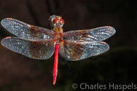 Dragonfly-3