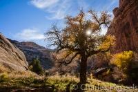 Cottonwood-Grand-Gulch-Utah