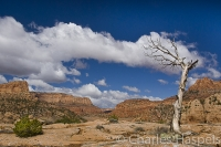 Old-Tree-Tsegi-Arizona