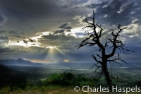 Old_Tree1-Montezuma_Valley_Overlook-0-Mesa__Verde1-Colorado