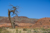 old-tree-stratification,-geology-Utah-Cedar-Mesa-Bears-Ears-Utah