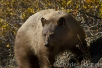Black-bear-Mesa-Verde-National-Park